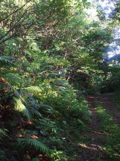 バナナロードと森林の始まり4.JPG