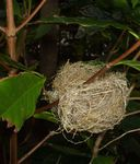 メジロの巣090507-2.JPG