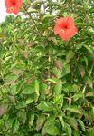 メジロの巣090508-1.jpg