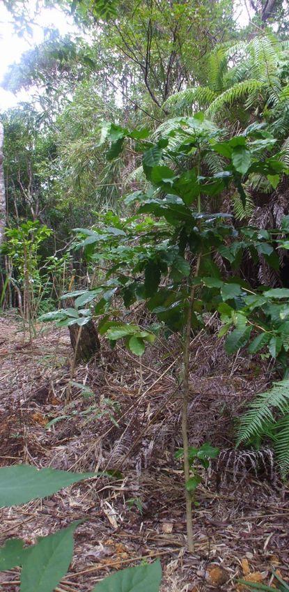 移植した苗木1004−2.JPG