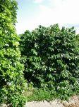 山城コーヒー農園2002−2.jpg
