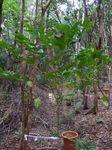林床地の苗木0411−1.JPG