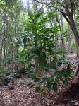 林床地の苗木0411−2.JPG